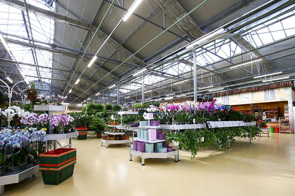 Mondo verde garden d 39 attrazione ten minutes diy and garden for Idea verde garden center